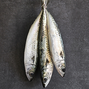 FRESH MACKEREL, & FILLETS