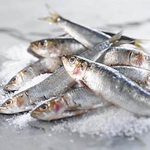 FRESH SARDINES (sold in 100 gram bags)