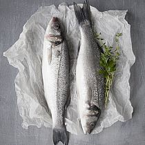 view FRESH SEA BASS, & FILLETS details